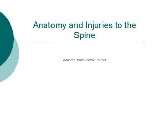 Anatomy and Injuries to the Spine Adapted from