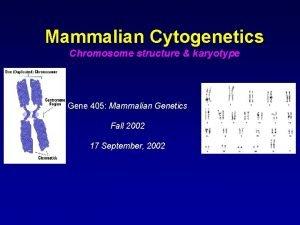 Mammalian Cytogenetics Chromosome structure karyotype Gene 405 Mammalian