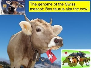 The genome of the Swiss mascot Bos taurus