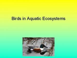 Birds in Aquatic Ecosystems Why Birds Important predators