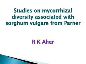 Studies on mycorrhizal diversity associated with sorghum vulgare