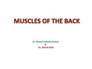 MUSCLES OF THE BACK Dr Ahmed Fathalla Ibrahim