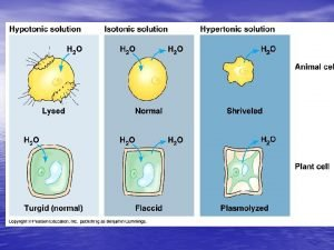 Isotonic solutions if the osmotic concentrations of both