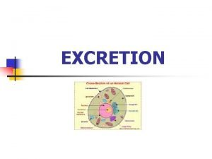 EXCRETION Excretion n Process by which metabolic wastes