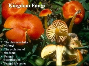 Kingdom Fungi The characteristics of fungi The evolution