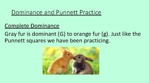 Dominance and Punnett Practice Complete Dominance Gray fur