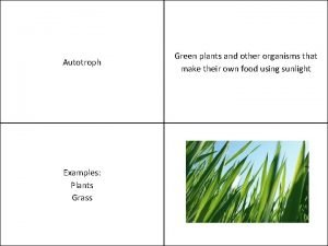 Autotroph Examples Plants Grass Green plants and other