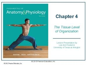 Chapter 4 The Tissue Level of Organization Lecture