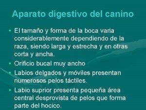 Aparato digestivo del canino El tamao y forma
