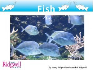 Fish By Jenny Ridgwell and Annabel Ridgwell Fish