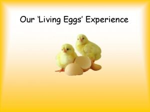 Our Living Eggs Experience First the eggs arrived