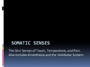 SOMATIC SENSES The Skin Senses of Touch Temperature