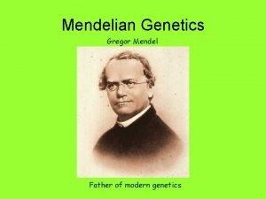 Mendelian Genetics Gregor Mendel Father of modern genetics