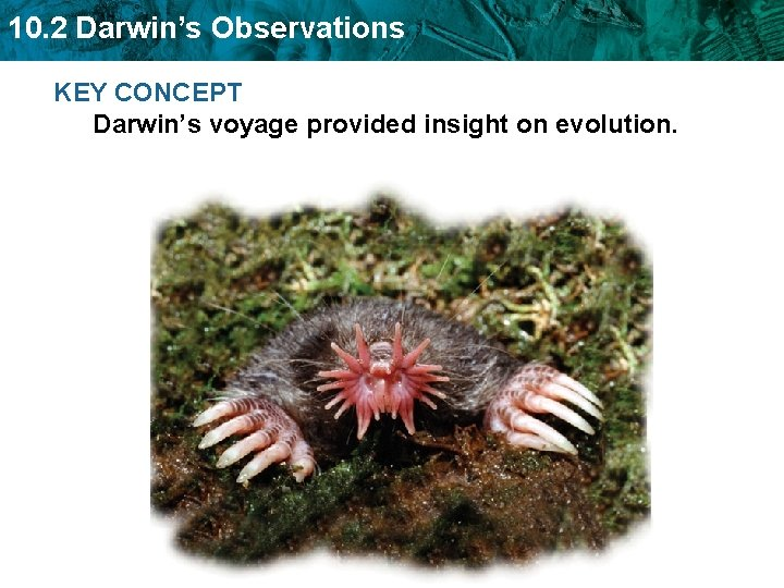 10 2 Darwins Observations KEY CONCEPT Darwins voyage