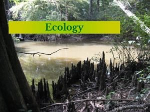 Ecology Ecology study of how living things interact