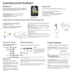 Cyanobacterial Oscillator Background Project Goal Cyanobacteria also known