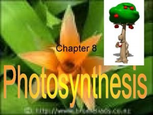 Chapter 8 I Energy and Life Energy ability