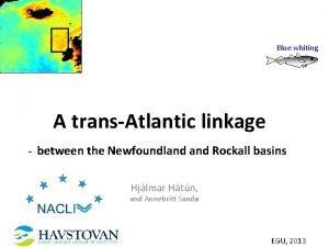 Blue whiting A transAtlantic linkage between the Newfoundland