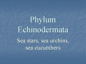 Phylum Echinodermata Sea stars sea urchins sea cucumbers