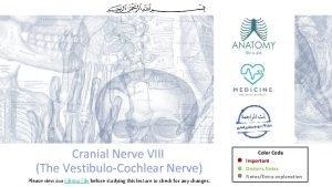 Cranial Nerve VIII The VestibuloCochlear Nerve Please view