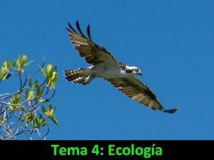 Tema 4 Ecologa ECOLOGA Ecologa estudio de las