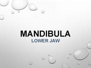 MANDIBULA LOWER JAW Anatomy Clinical notes Dentoalveolar topography