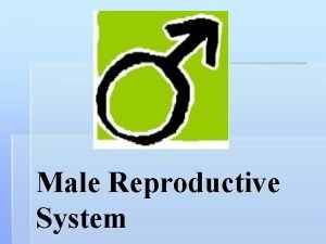 Male Reproductive System Reproductive Systems The function of