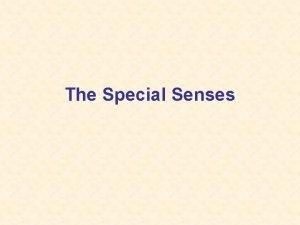 The Special Senses Five Senses Vision Sight Hearing