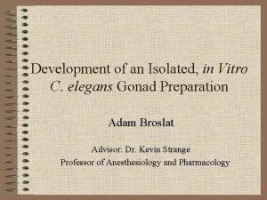 Development of an Isolated in Vitro C elegans