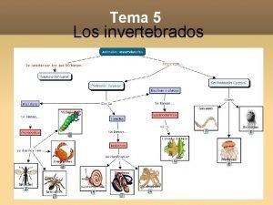Tema 5 Los invertebrados Objetivos Utilizar adecuadamente el