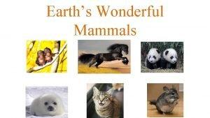 Earths Wonderful Mammals Characteristics All mammals are warm