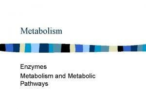 Metabolism Enzymes Metabolism and Metabolic Pathways Enzymes n