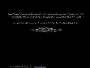 LowDose Perampanel Rescues Cortical Gamma Dysregulation Associated With