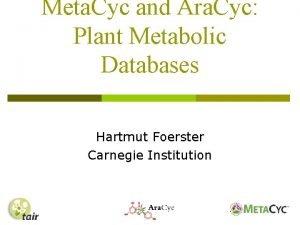 Meta Cyc and Ara Cyc Plant Metabolic Databases