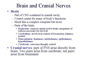 Brain and Cranial Nerves Brain Part of CNS