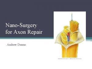 NanoSurgery for Axon Repair Andrew Dunne Background Injury