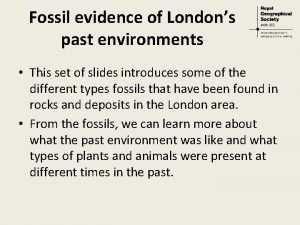 Fossil evidence of Londons past environments This set