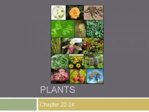 PLANTS Chapter 22 24 What are plants Eukaryotic