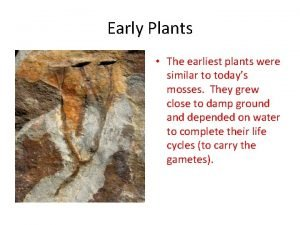 Early Plants The earliest plants were similar to