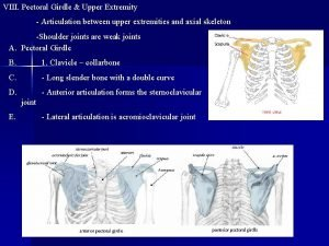 VIII Pectoral Girdle Upper Extremity Articulation between upper