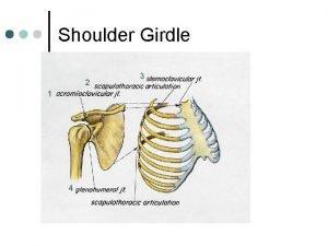 Shoulder Girdle 2 1 4 3 Shoulder Girdle