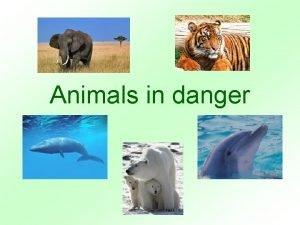 Animals in danger Animals in danger different continent