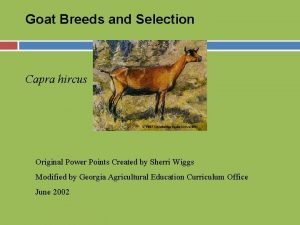 Goat Breeds and Selection Capra hircus Original Power