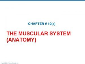 CHAPTER 10a THE MUSCULAR SYSTEM ANATOMY Copyright 2010