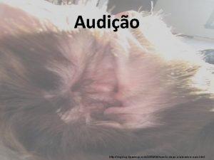 Audio http dogblog 8 pawsup com200906howtocleanalabradorsears html Audio