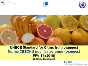 UNECE Standard for Citrus fruit oranges Norme CEEONU