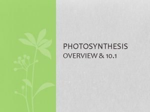 PHOTOSYNTHESIS OVERVIEW 10 1 OVERVIEW The Process That