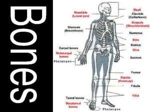 Can you believe we have 206 bones Skull
