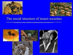 The social structure of insect societies Downloaded from