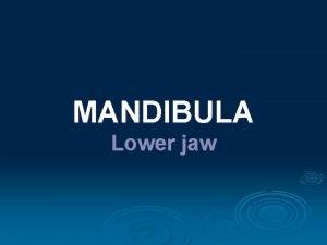 MANDIBULA Lower jaw Anatomy repetition Widespread description and